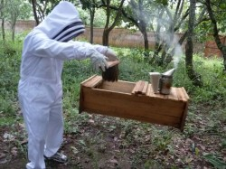 Transferring bees to hive